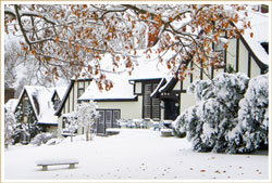 winterspecialicon