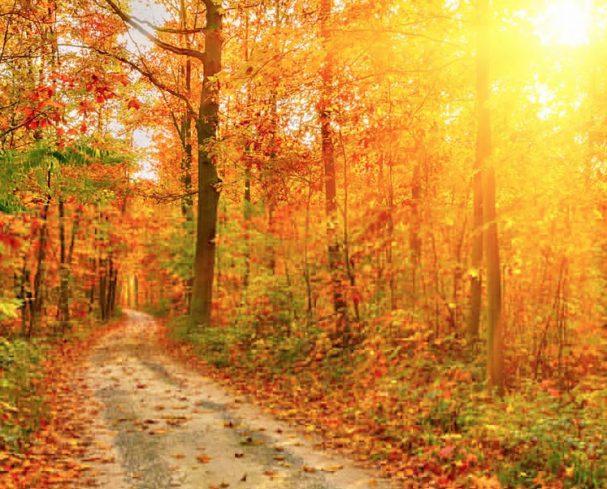 Foliage in West Virginia