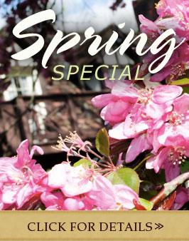 Spring-16Flash-Ad