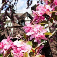 West Virginia B&B flowers