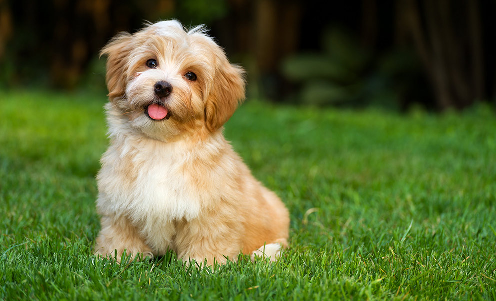 Furry friends welcome to stay at our pet friendly West Virginia hotel