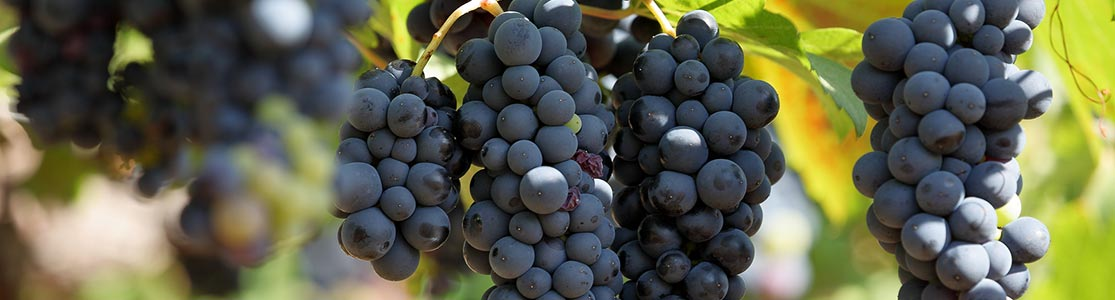 Grapes from a West Virginia winery