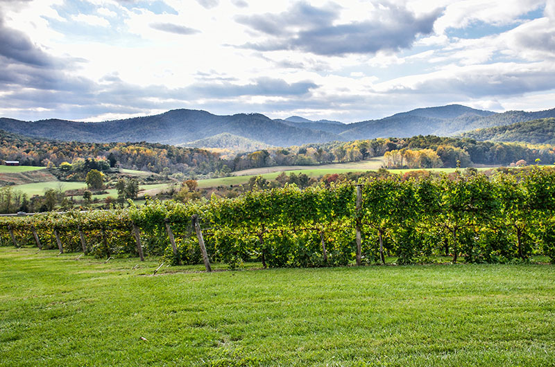 Northern Virginia Wine Trail