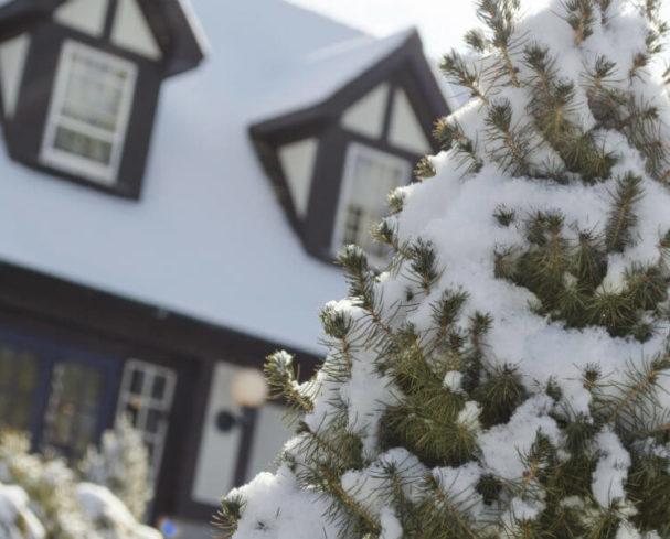 Snowy pine tree outside of Hillbrook Inn