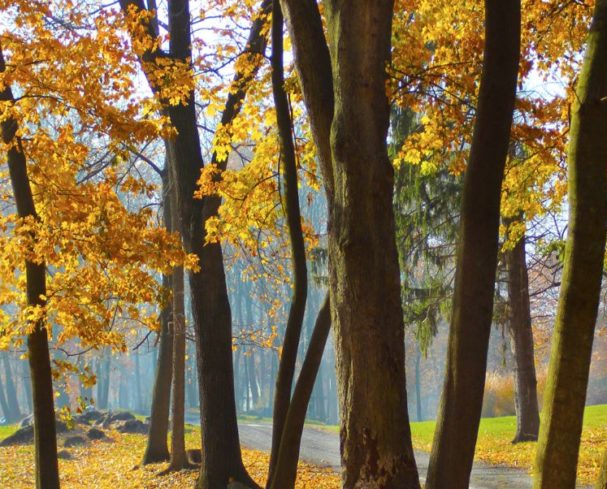 Fall Trees While Hiking in West Virginia